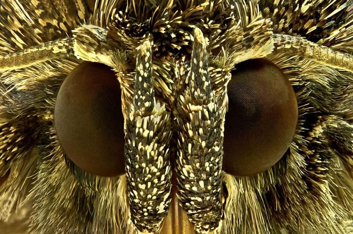 macro insect - fur (8)