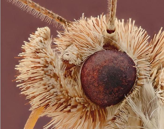 macro insect - fur (9)