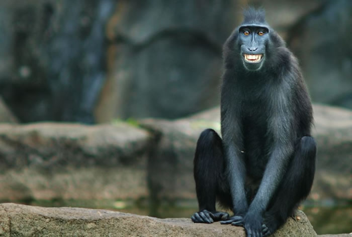 10 Smiling Animals To Make You Feel Good