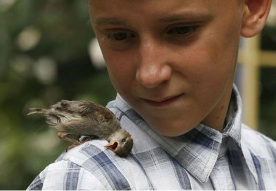 Amazing Photo Of Friendship Between A Boy And A Bird