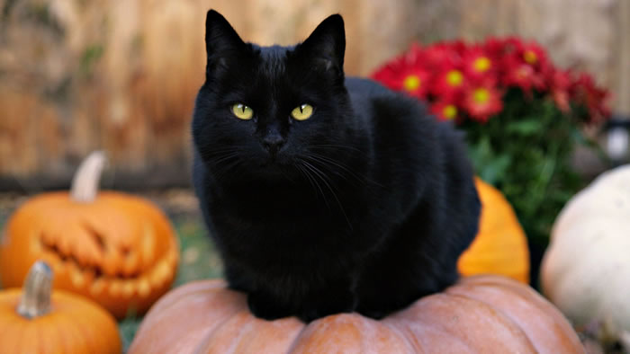 Black Cat For Halloween 4