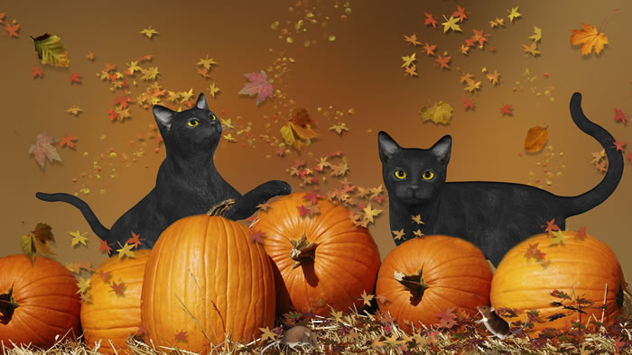 Black Cats Halloween - Why Are They Considered Bad Luck?