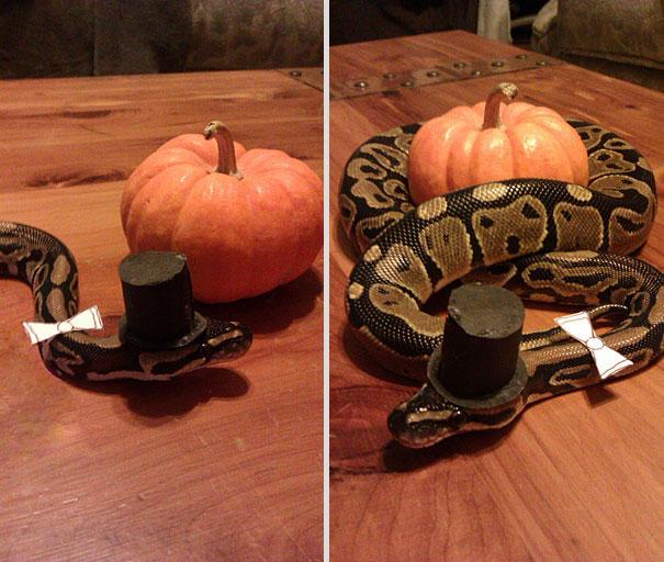 classy snake