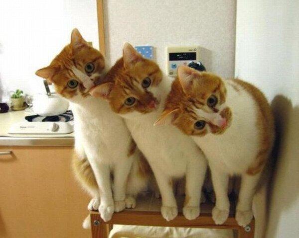 crazy cats (4)