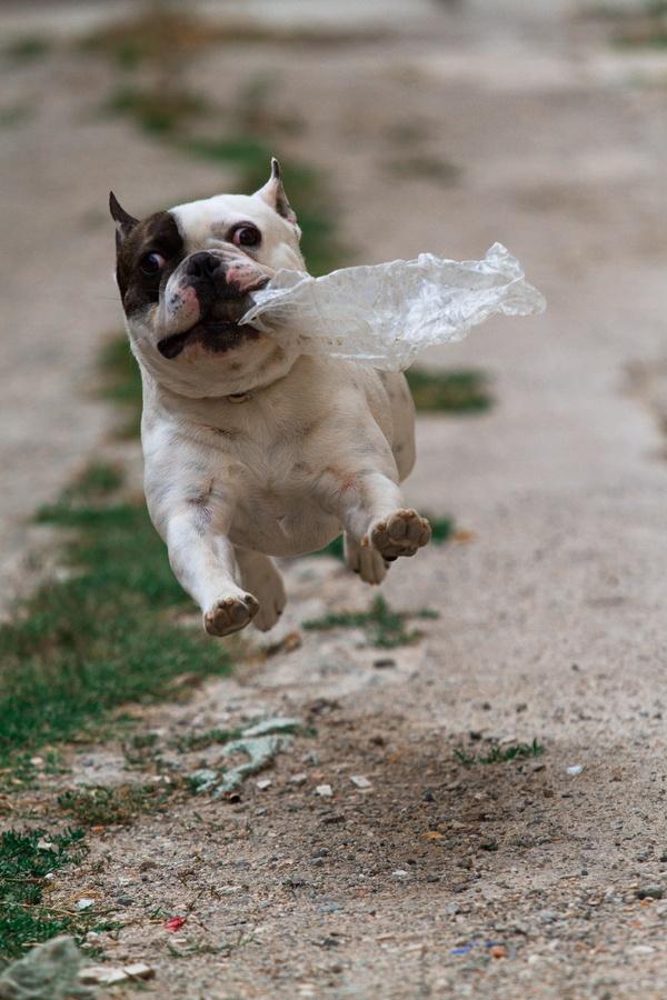 Daily Wtf 10 Crazy Dog Pics