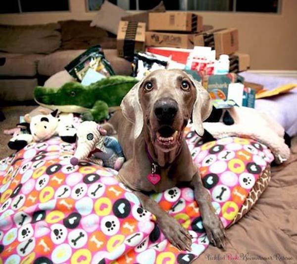 dog adoption (10)