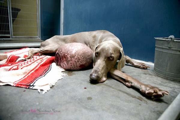 dog adoption (3)