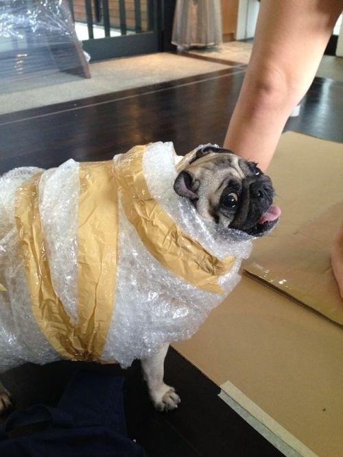 dog costumes (10)