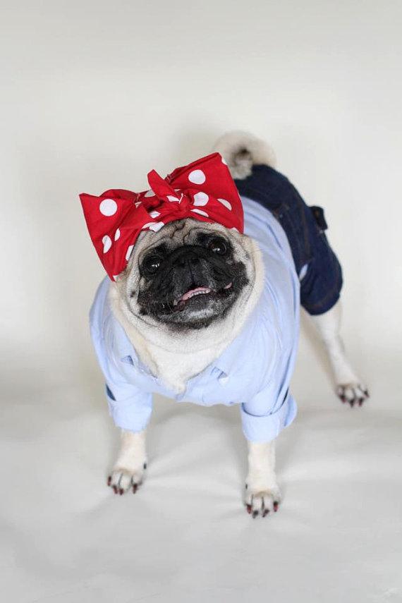 dog costumes (13)