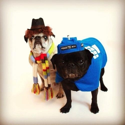 dog costumes (14)
