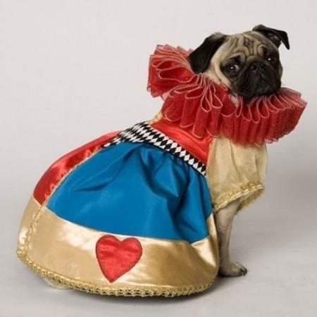 dog costumes (15)