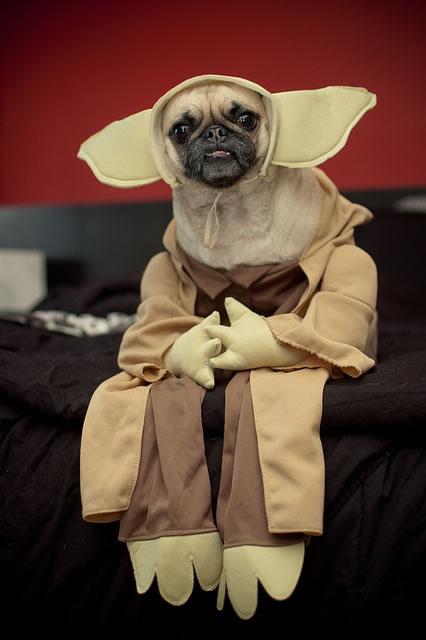 dog costumes (17)