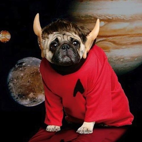 dog costumes (8)