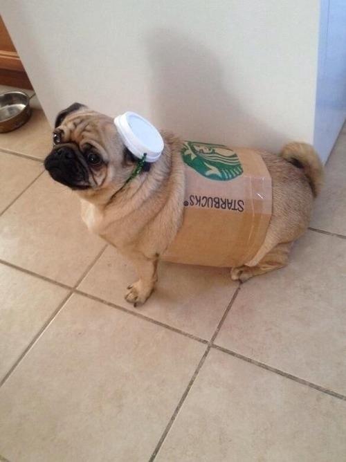 dog costumes (9)