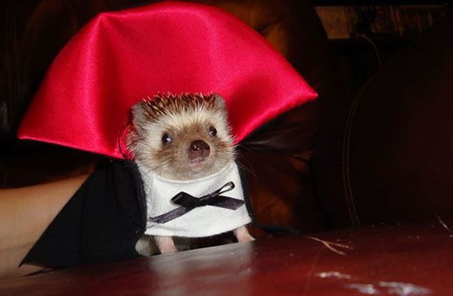 Creative Pet Costumes For Halloween