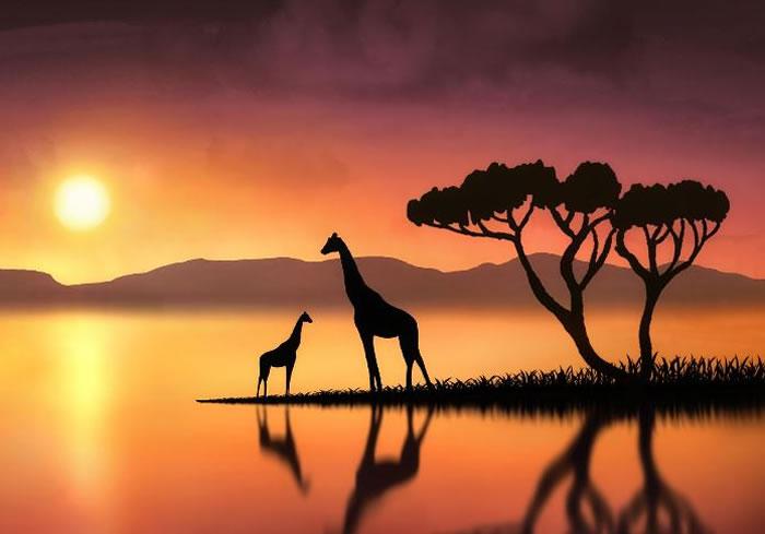 wildlife stock photos (3)
