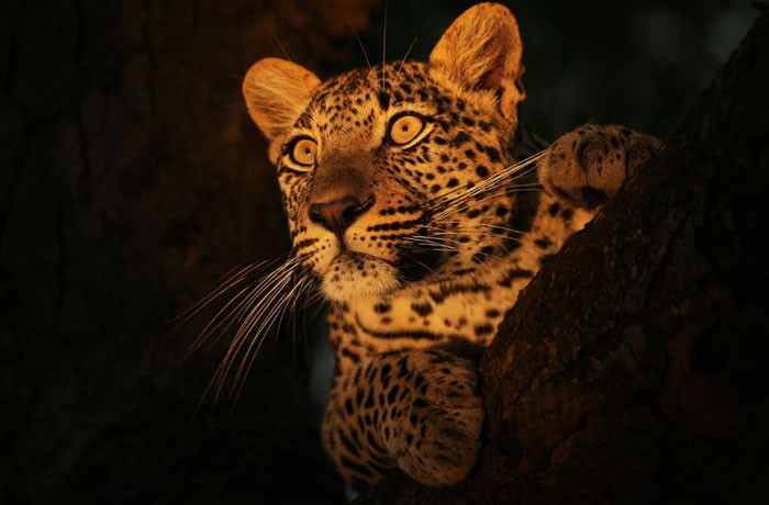 wildlife stock photos (5)