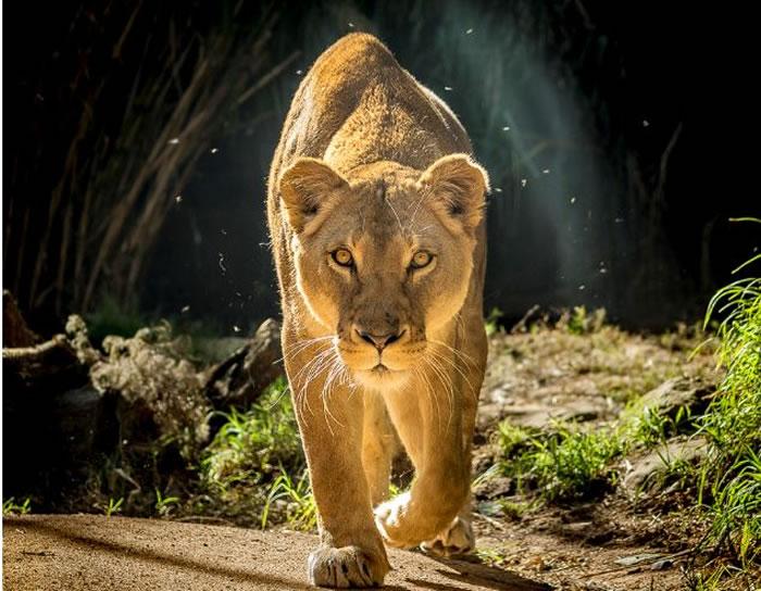 wildlife stock photos (7)