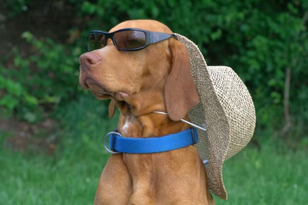 10. Dog with Cap and Sunglasses