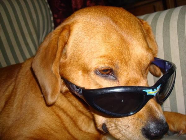 22. copper in sunglasses