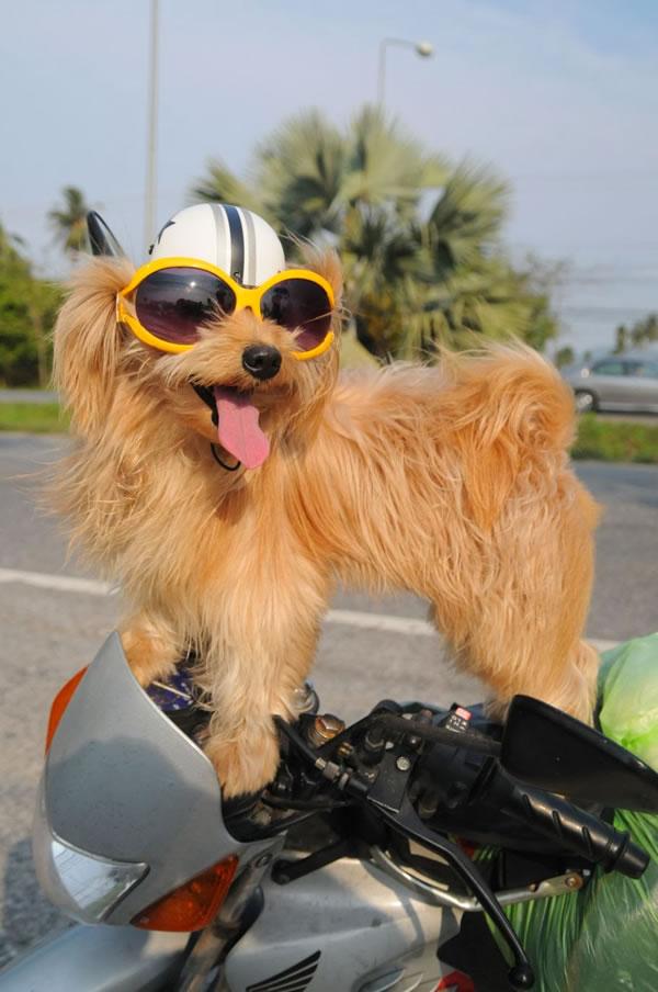 25. dog on motorbike, Thailand