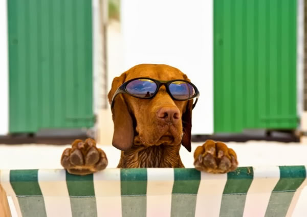 27. Dog with Sunglasses at Beach