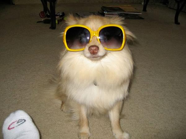 28. Mocha and Sunglasses