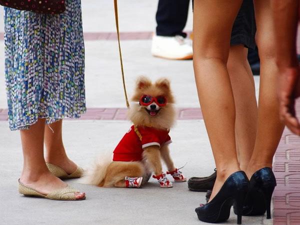 3. Dog wears sunglasses