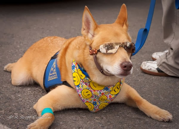 6. Riley - Paws 4 Healing Therapy Dog