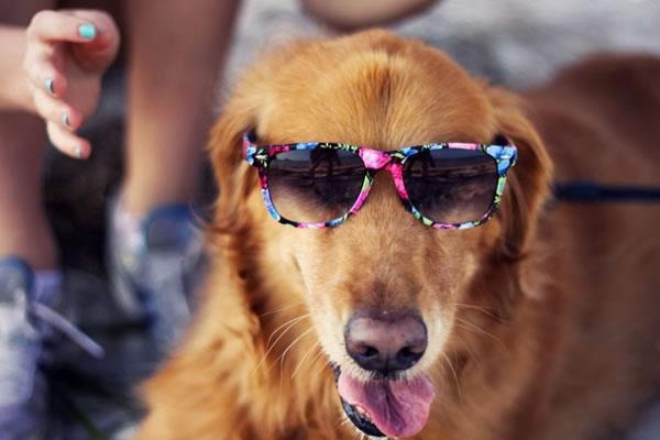 9. Cool Dawg
