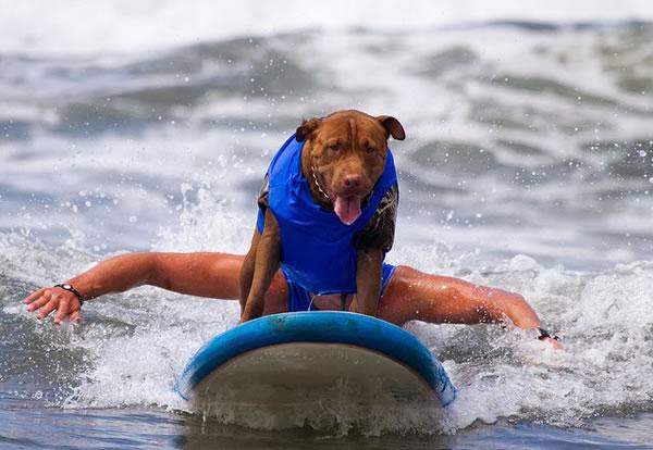 Surf City Surf Dog surfer surfing 14
