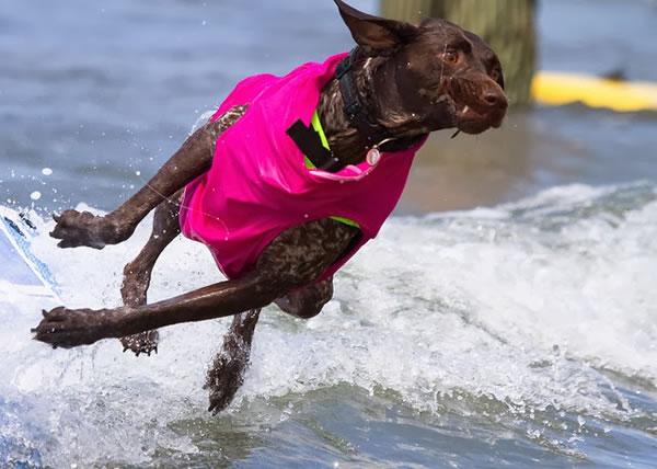 Surf City Surf Dog surfer surfing 24