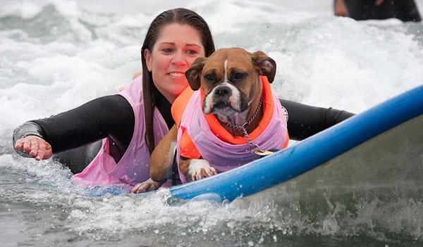 Surf City Surf Dog surfer surfing 5