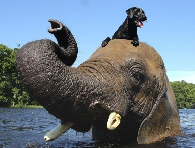 """1 a dog and an elephant set out to prove that """"species"""" is just a classification - Website Photo Gallery Our 20 Cutest Animal Stories Of 2013"""