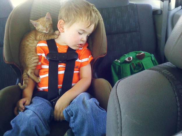 10 boy and his new kitten fell asleep in a car seat while the world's saddest backpack looked on - Website Photo Gallery Our 20 Cutest Animal Stories Of 2013