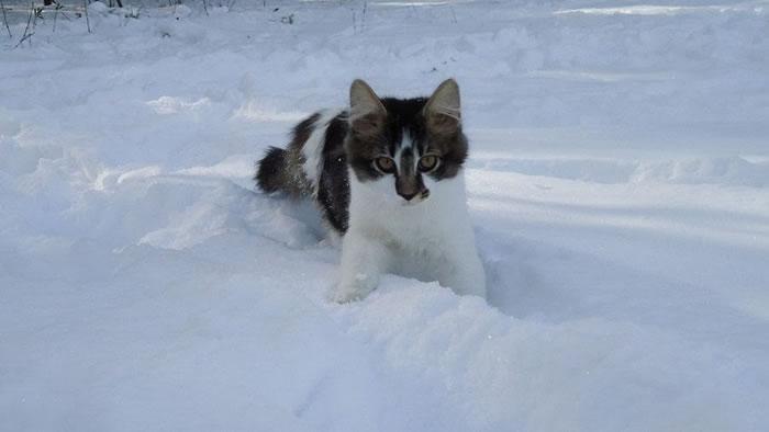 13. He hates the snow by arabiansrcute