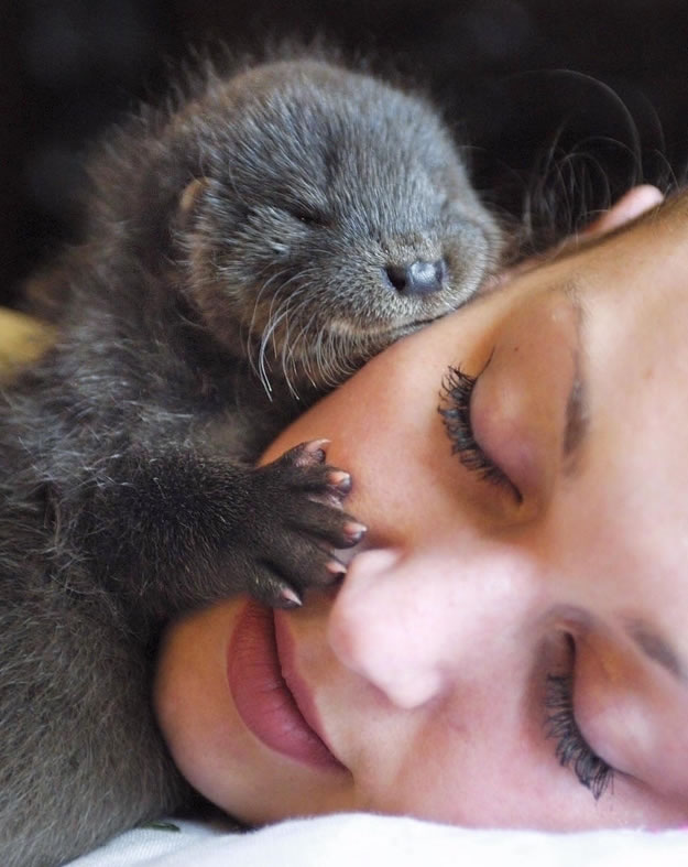 15 world's luckiest face had a visit from a baby otter - Website Photo Gallery Our 20 Cutest Animal Stories Of 2013