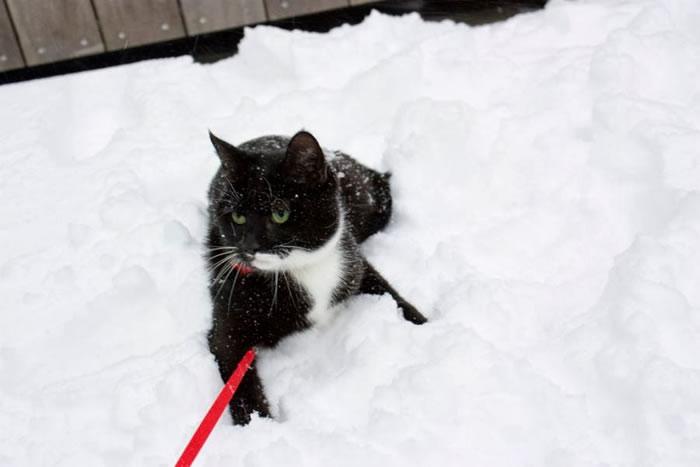15. Abby hates snow