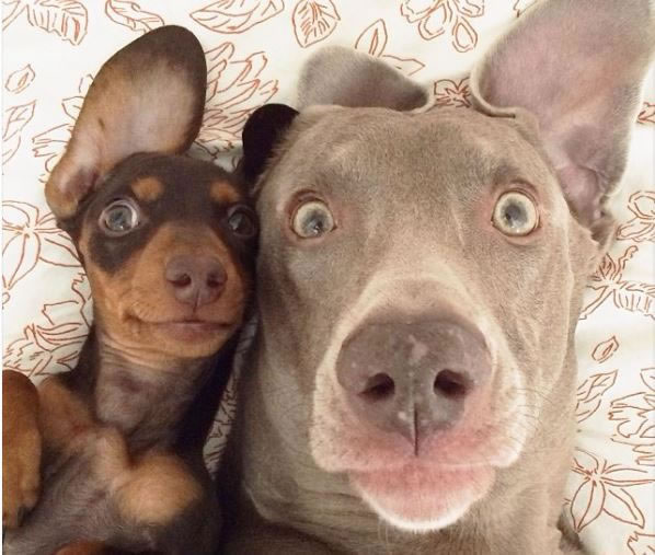 17 Harlow and Sage became the world's funniest best friends - Website Photo Gallery Our 20 Cutest Animal Stories Of 2013