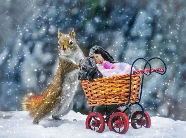 19 squirrel dramatically pushed a baby carriage with a teddy bear in it through the snow - Website Photo Gallery Our 20 Cutest Animal Stories Of 2013