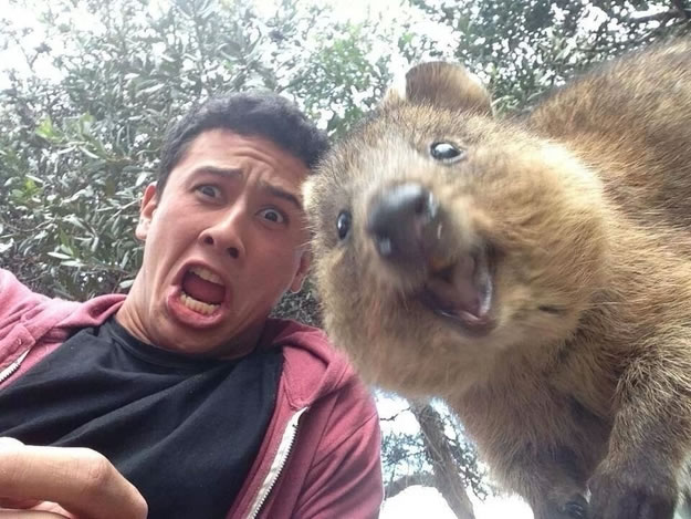 """20 Quokkas became the """"it"""" animal in 2013 thanks to their enthusiasm and their winning smiles - Website Photo Gallery Our 20 Cutest Animal Stories Of 2013"""