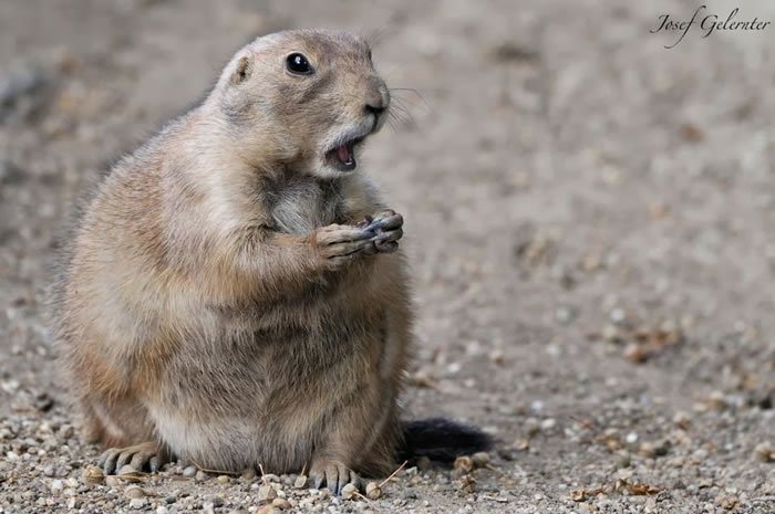 21. Shocked Prairie Dog