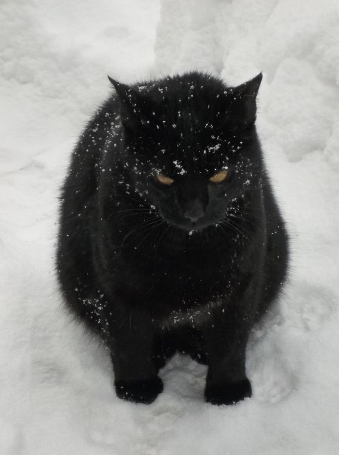 3. I hate snow...by katozo - Funny Images Photos Of Cats That Hate Snow
