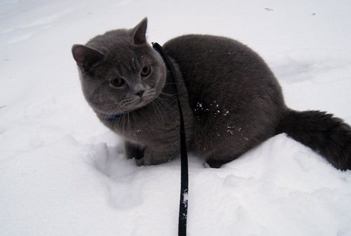 4. Livar hates snow XD by Lolbarn - Funny Images Photos Of Cats That Hate Snow