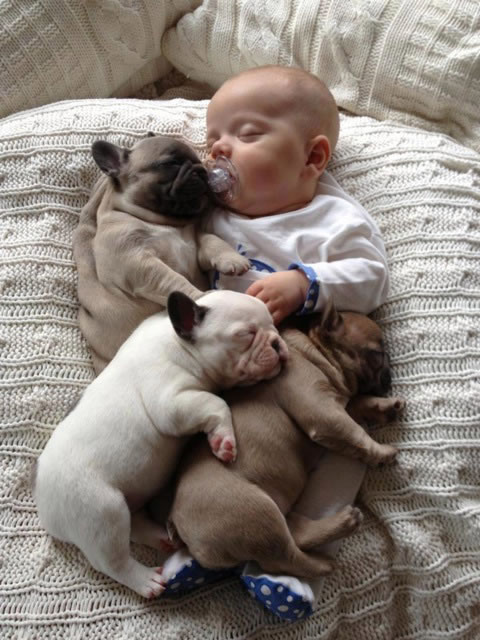 7 Baby and Frenchie diplomacy reached  almost unthinkable heights - Website Photo Gallery Our 20 Cutest Animal Stories Of 2013