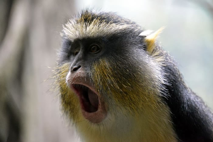 8. Shocked Monkey