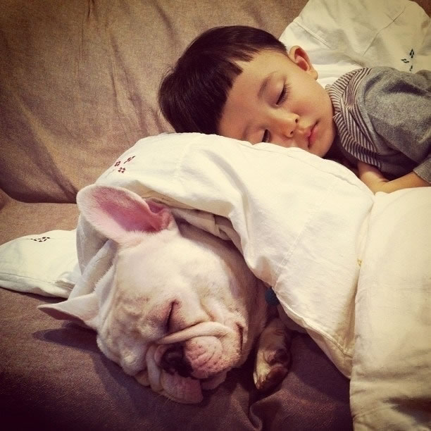 9 Japanese boy and his French bulldog found that they were indispensable to one another - Website Photo Gallery Our 20 Cutest Animal Stories Of 2013
