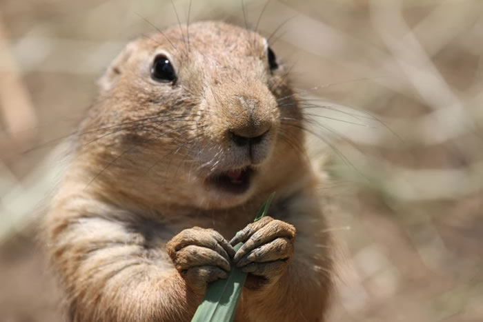 9. Prarie Dog Shocked