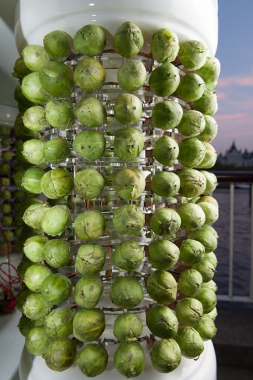Christmas Tree Powered By Brussels Sprouts On Show In London 2