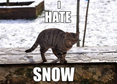 12 Funny Images Photos Of Cats That Hate Snow